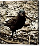Really It Is Mine- Says The Grackle Bird Acrylic Print
