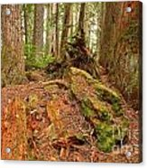 Recycling In The Cheakamus Rainforest Acrylic Print
