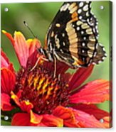 Bordered Patch Acrylic Print