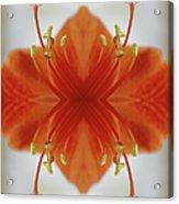 Red Amaryllis Flower Acrylic Print