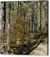 Red Among The Pines Acrylic Print