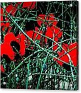 Red An Black Poppies 1 Acrylic Print