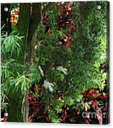 Red And Green Foliage Acrylic Print