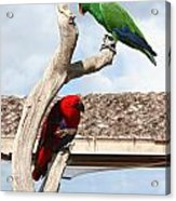 Red And Green Parrots Acrylic Print