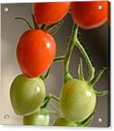 Red And Green Tomatoes Acrylic Print