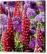 Red And Purple #1 Acrylic Print