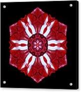 Red And White Amaryllis Iv Flower Mandala Acrylic Print