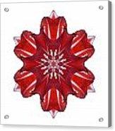 Red And White Amaryllis Vii Flower Mandala White Acrylic Print