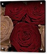 Red And White Roses Color Engraved Acrylic Print