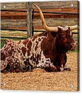 Red And White Texas Longhorn Acrylic Print