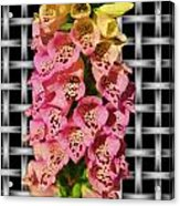 Red And Yellow Hollyhocks Acrylic Print