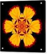 Red And Yellow Marigold II Flower Mandala Acrylic Print