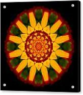 Red And Yellow Marigold V Flower Mandala Acrylic Print