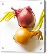 Red And Yellow Onion With Sprout Acrylic Print