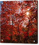 Red Autumn Leaves Acrylic Print