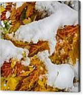 Red Autumn Maple Leaves With Fresh Fallen Snow Acrylic Print