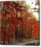 Red Autumn Road In Snow Acrylic Print