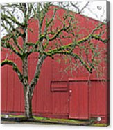 Red Barn And Green Tree In Dundee Hills Oregon Wine Country Acrylic Print