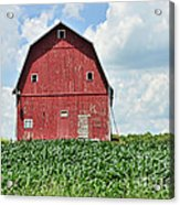 Red Barn And New Corn Acrylic Print