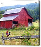 Red Barn And Rooster Acrylic Print