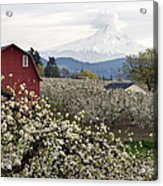 Red Barn In Hood River Pear Orchard Acrylic Print