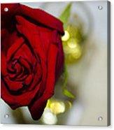 Red Beauty II Acrylic Print