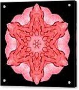 Red Begonia II Flower Mandala Acrylic Print