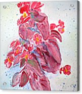 Red Begonias Acrylic Print