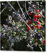 Red Berries And Violet Flowers Acrylic Print