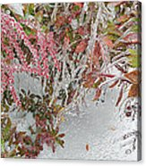 Red Berries Over Snow Acrylic Print