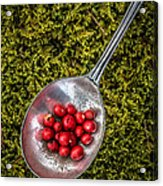 Red Berries Silver Spoon Moss Acrylic Print by Edward Fielding