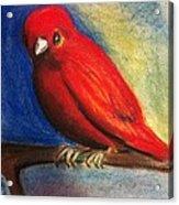 Red Bird Acrylic Print by Anais DelaVega