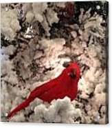 Red Bird In A Snow Covered Tree Acrylic Print