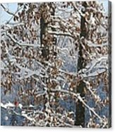 Red Bird On Snow Covered Limb Acrylic Print