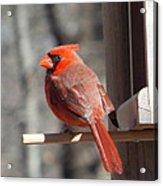 Red Birds Acrylic Print