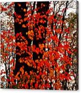 Red Blaze Burst Acrylic Print
