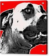 Red Blooded Scooby Dog Acrylic Print