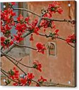 Red Blossoms In The Pink City Acrylic Print