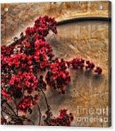 Red Bougainvilla Vine On Stucco Wall Acrylic Print