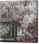 Red Building White Buds Acrylic Print