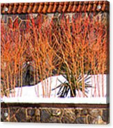 Red Bushes And Rock Wall Acrylic Print