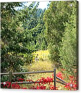 Red Bushes Acrylic Print