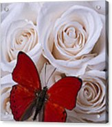 Red Butterfly Among White Roses Acrylic Print