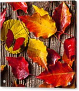 Red Butterfly In Autumn Leaves Acrylic Print