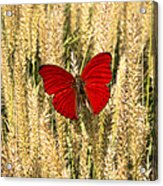 Red Butterfly In The Tall Weeds Acrylic Print