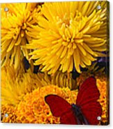 Red Butterfly On African Marigold Acrylic Print
