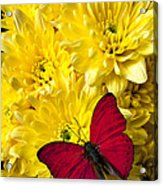 Red Butterfly On Poms Acrylic Print