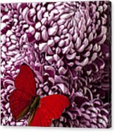 Red Butterfly On Red Mum Acrylic Print