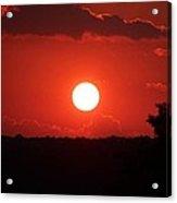 Red By Mark Abbott Acrylic Print