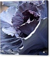 Red Cabbage Abstract Acrylic Print